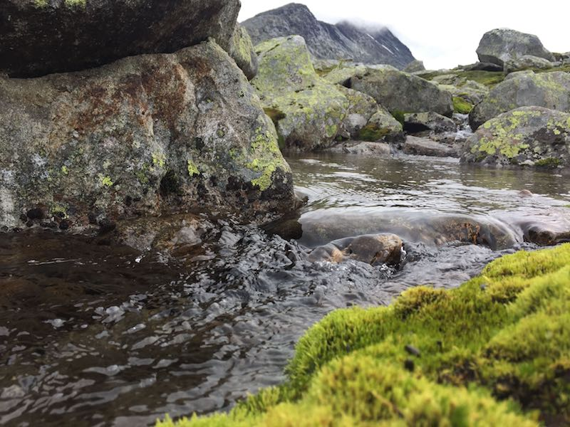 Image of drinking water flowing in stream among rocks and moos patches taken in Norway's National Park Jotunheimen