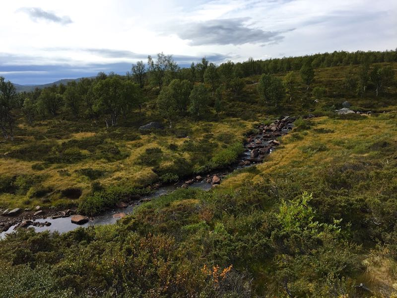 Image of natural river flowing among bushes and trees taken in Norway's Langusa National Park.